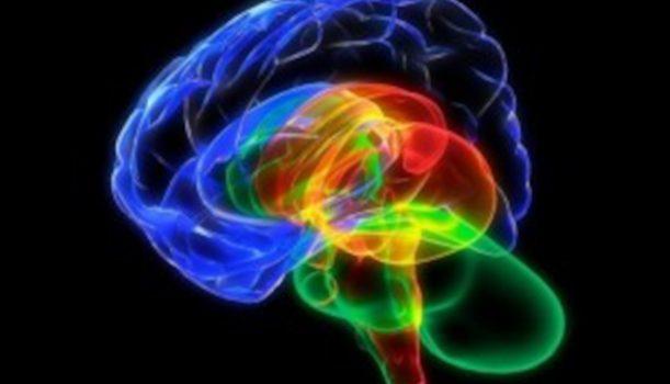 Realtà extra corticali e neuro immagini